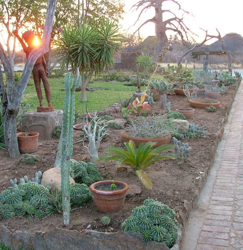 "Desert Garden Ideas: Best Desert Landscaping Ideas For Clever ""low Maintenance"